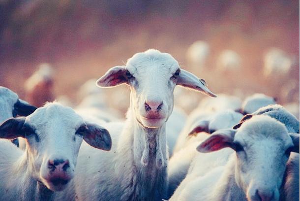 全面羊奶时代,倍恩喜只为打造世界前列的好羊奶